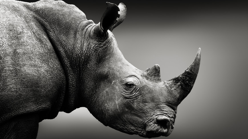 В Китае нашли новый вид древнего гигантского носорога