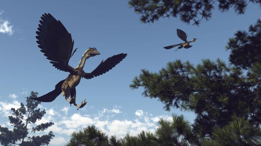 В Китае нашли останки древней птицы с головой тираннозавра
