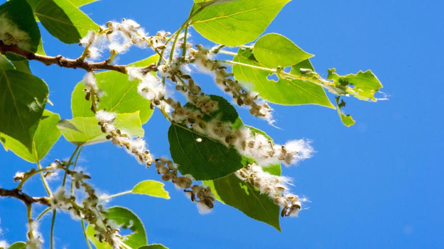 Врач дала советы для аллергиков в период цветения