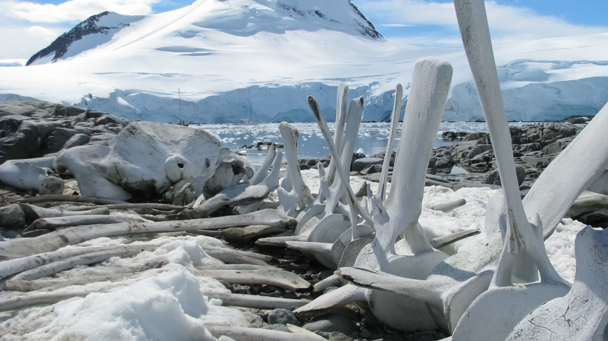 В Арктике нашли кости динозавров, обитавших там круглый год