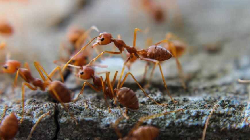 Ловчий конус: назван эффективный способ защитить дерево от муравьев