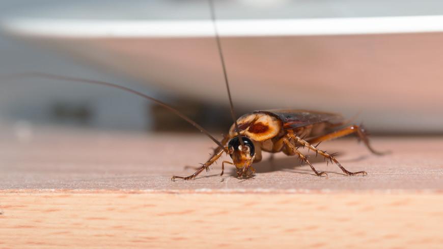 Тараканов-киборгов научили искать людей