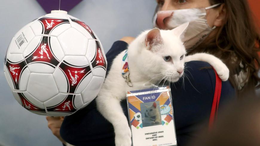 Кот-оракул Ахилл получил паспорт болельщика на матчи Евро-2020