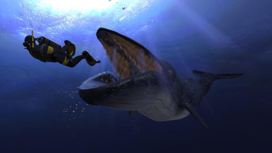 Дайверу в США удалось выбраться невредимым из пасти кита