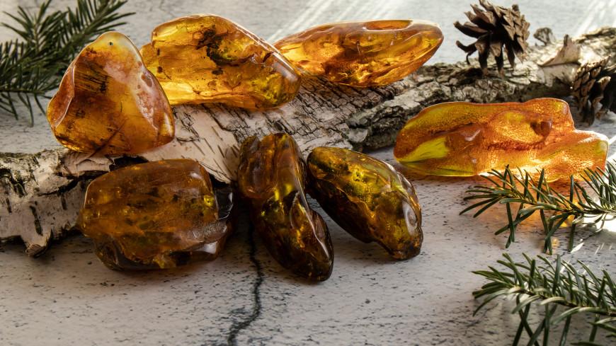 В янтаре нашли следы древнейшего грибка-паразита
