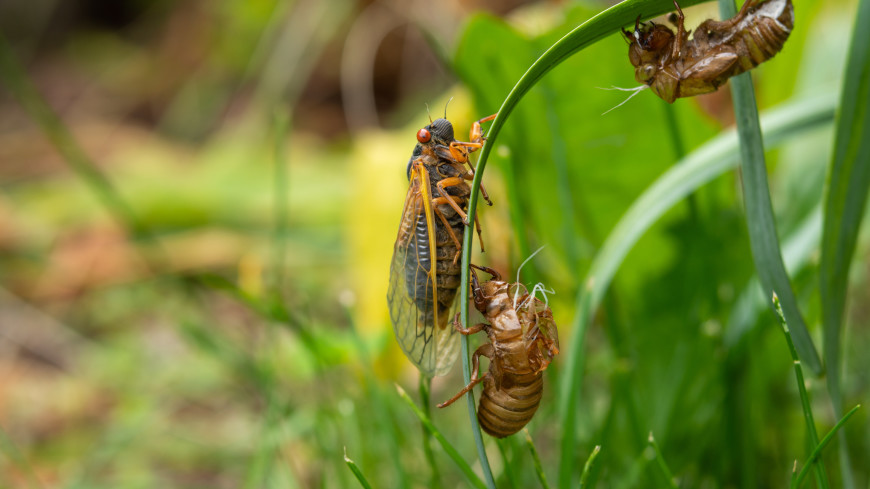 Погода в СНГ: поля в Кыргызстане заполонили цикады, в Беларуси водоемы очищают от водорослей