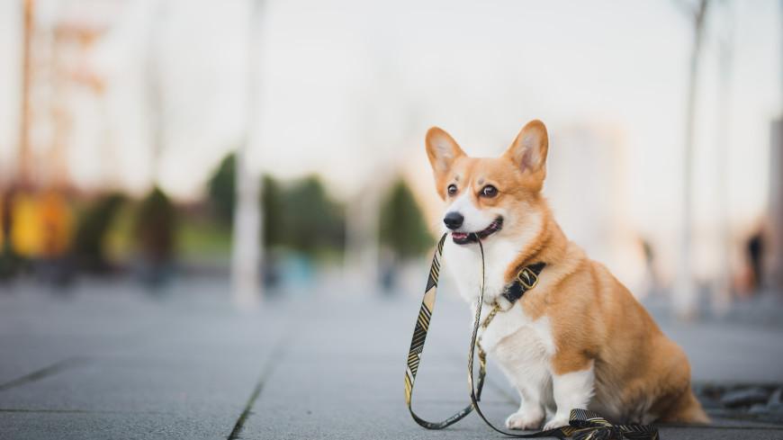 Штрафы за нарушение правил выгула собак вступают в силу в Подмосковье