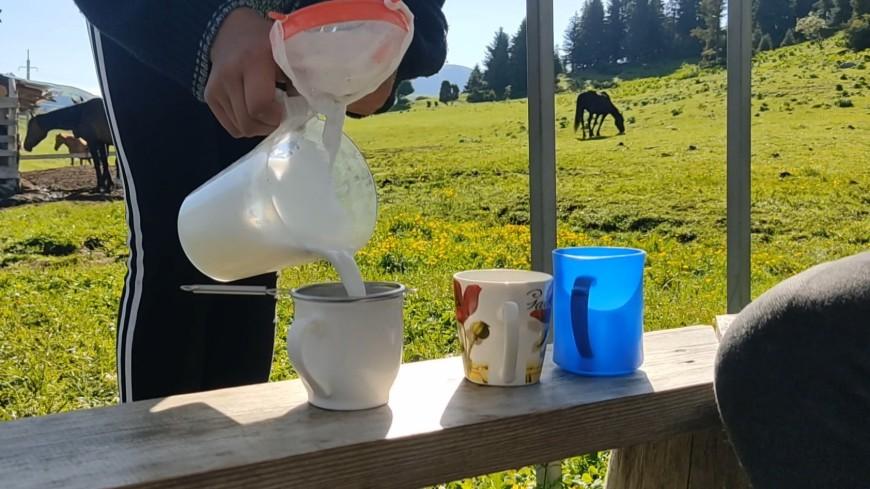 Волшебное молоко: как кумыс жителей «Кайфовой ямы» с колен поднял