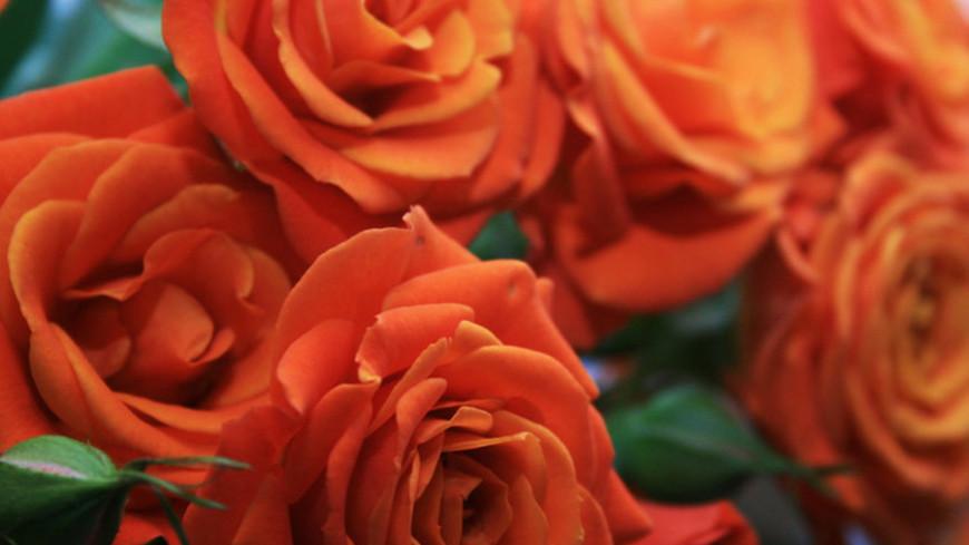 © Фото: «Мир 24», весна, розы, цветы, букет