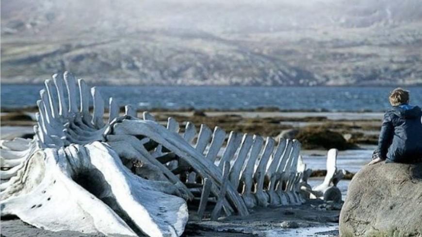 Скелет кита из фильма «Левиафан» станет достопримечательностью в Заполярье