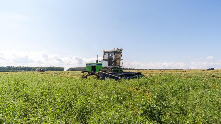Путин надеется на хороший урожай в 2021 году