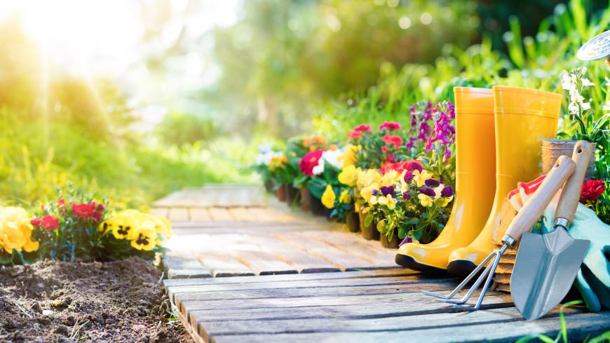 Борьба за урожай: что не забыть сделать в огороде в июне