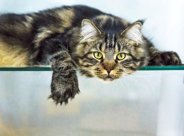 Праздник усатых-полосатых: как в России отмечают День кошек