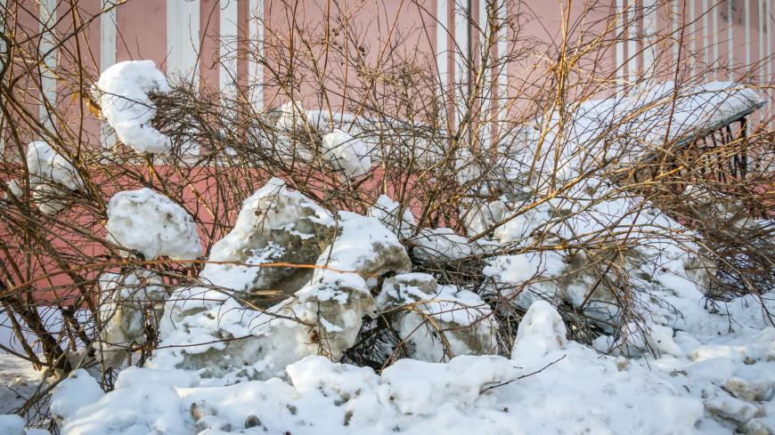 Зима в городе (снег, сугроб, холод, мороз, ель, елка, куст)