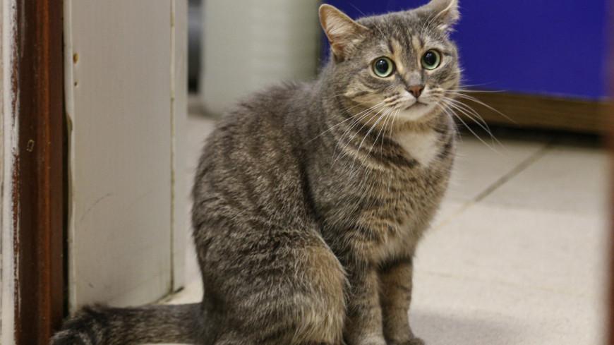 В Московском зоопарке рассказали, кто не пускает на территорию бродячих кошек