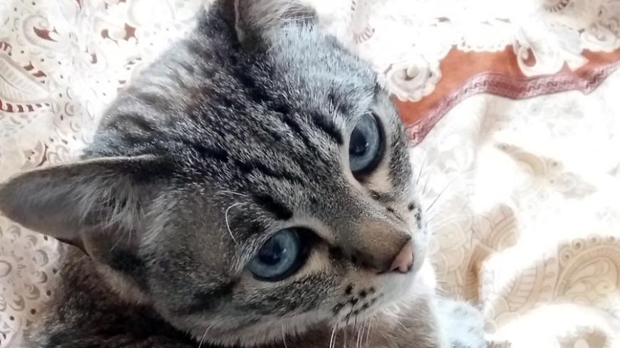"© Фото: ""Дарья Никишина, «МИР 24»"":http://mir24.tv/, кошка, кот"