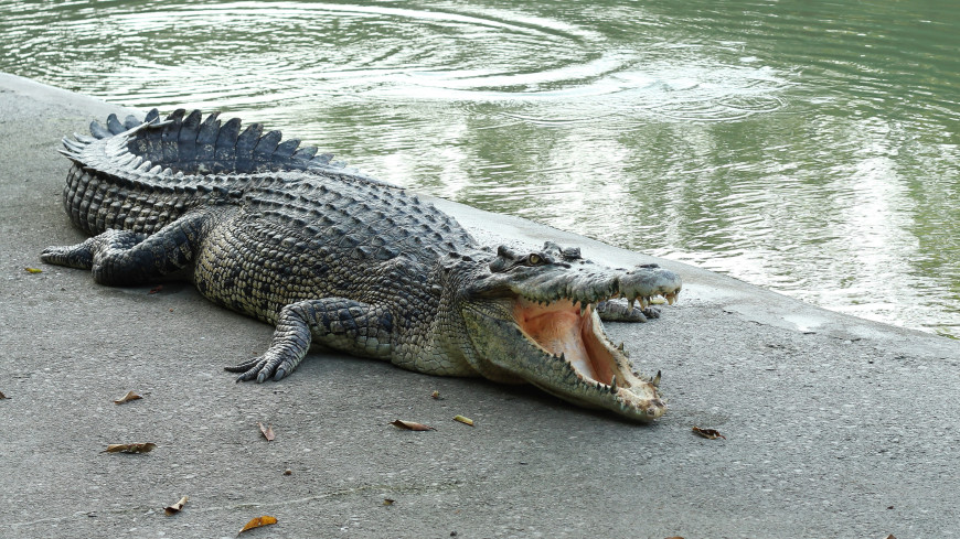 Крокодилы смогли пережить динозавров благодаря быстрой эволюции