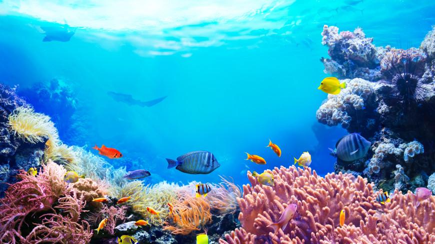 Кораллы в Тихом океане впервые удалось пересчитать