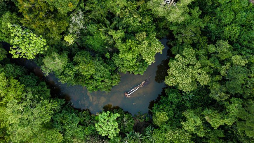 Амазонские леса начали «нагревать» планету