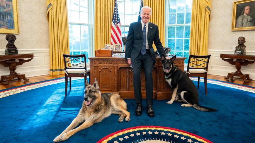 СМИ: Овчарка Байдена вновь покусала человека в Белом доме
