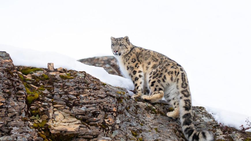В Приморье котята редкого леопарда попали в кадр (ВИДЕО)