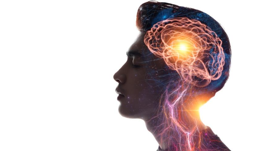 Причину большого размера человеческого мозга нашли в генах