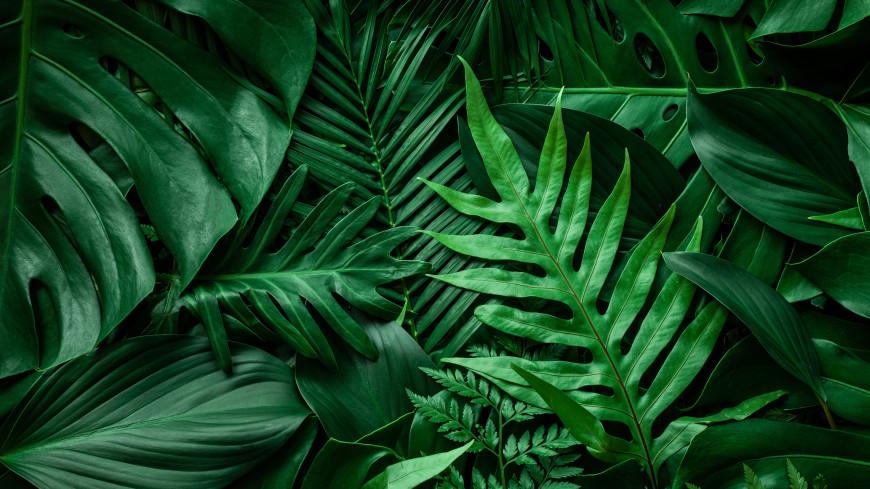 Тропики могут стать необитаемыми из-за потепления
