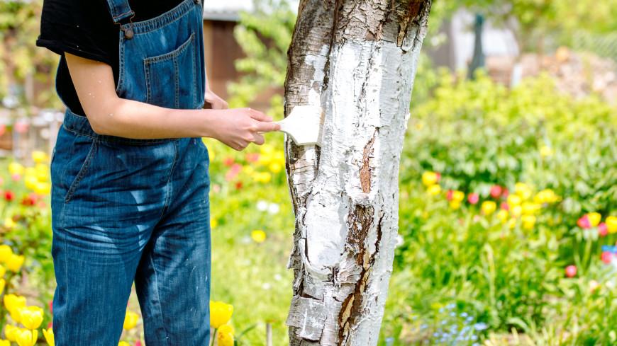 Советы дачнику: нужно ли обрабатывать деревья весной?