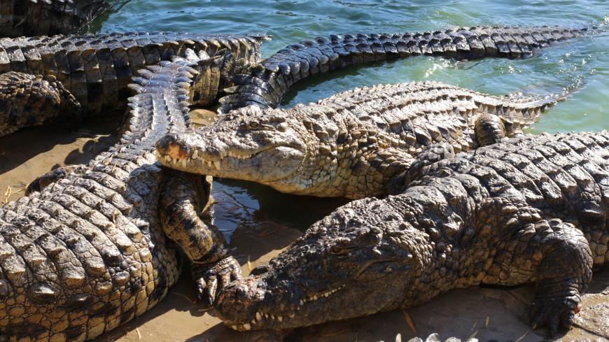 Полиция ЮАР ищет сбежавших через дырку в заборе фермы нильских крокодилов