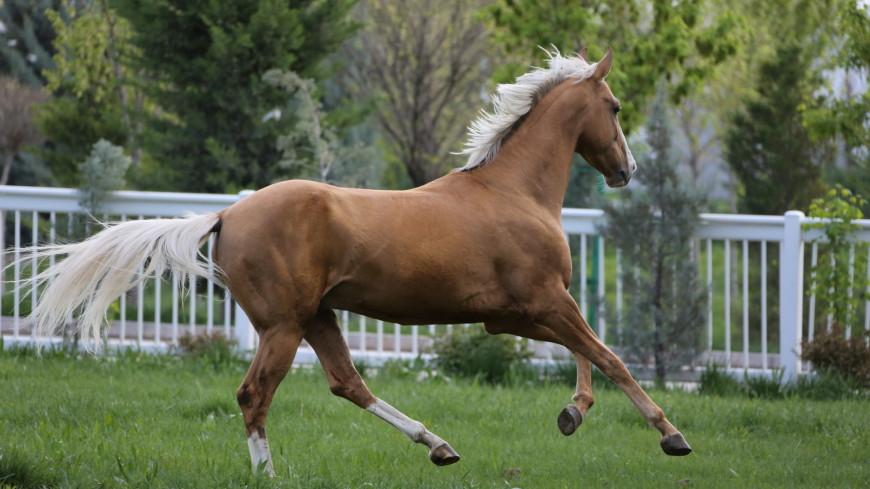 Наследники «небесных коней»
