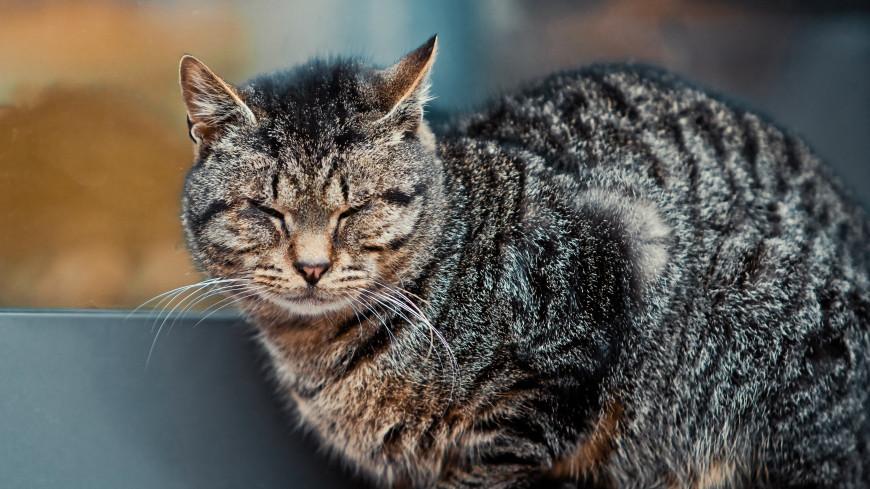 В Новой Москве кот запер женщину на балконе