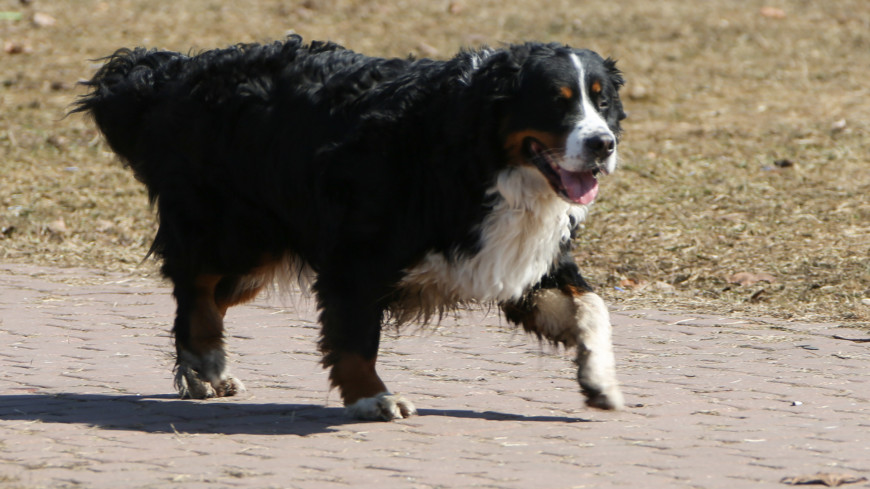 Собака, Выгул