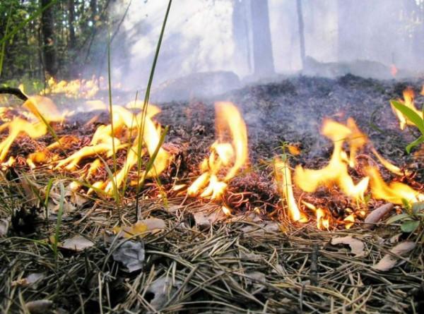 Спасатели с помощью беспилотников, вертолетов и тракторов сдерживают природные пожары