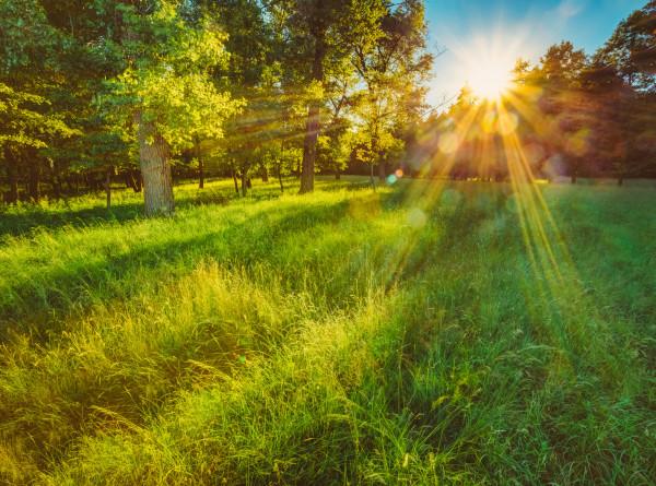 Синоптик: В Центральной части России на этой неделе установится летняя погода