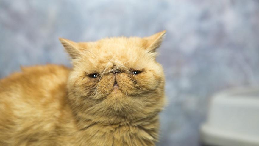 Воспитываются голодом, не мстят и любят много лотков: что мы не знали о котах