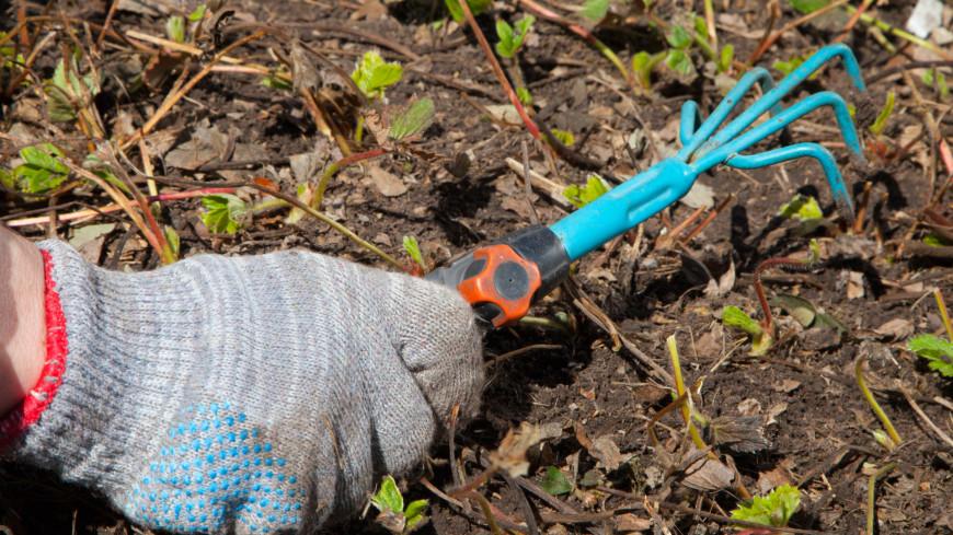 Садовый инструмент,садовый инструмент, огород, посадки, дача, ,садовый инструмент, огород, посадки, дача,