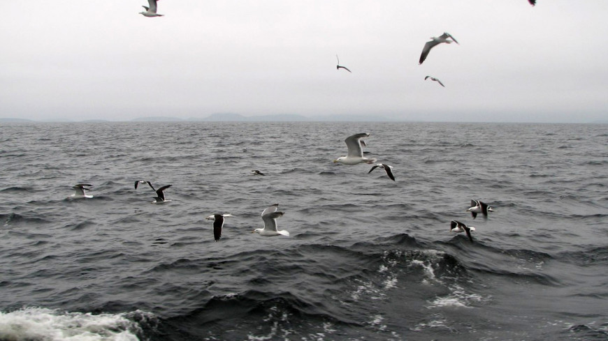 В акватории Баренцева моря нашли тела трех рыбаков
