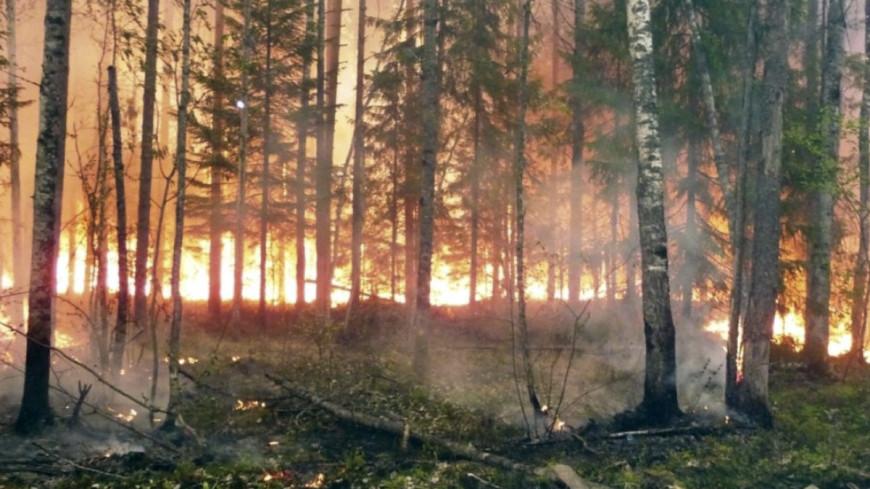 Площадь лесных пожаров в Якутии за сутки стала больше на две тысячи гектаров