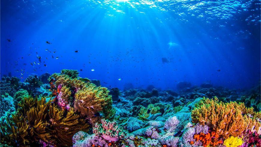 Найдено морское существо, способное к регенерации всего тела