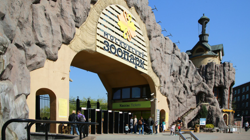 В Московском зоопарке завершен монтаж пролетного строения моста через Большую Грузинскую улицу