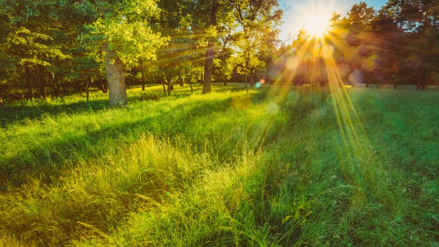 Синоптик: в Центральной части России установится летняя погода