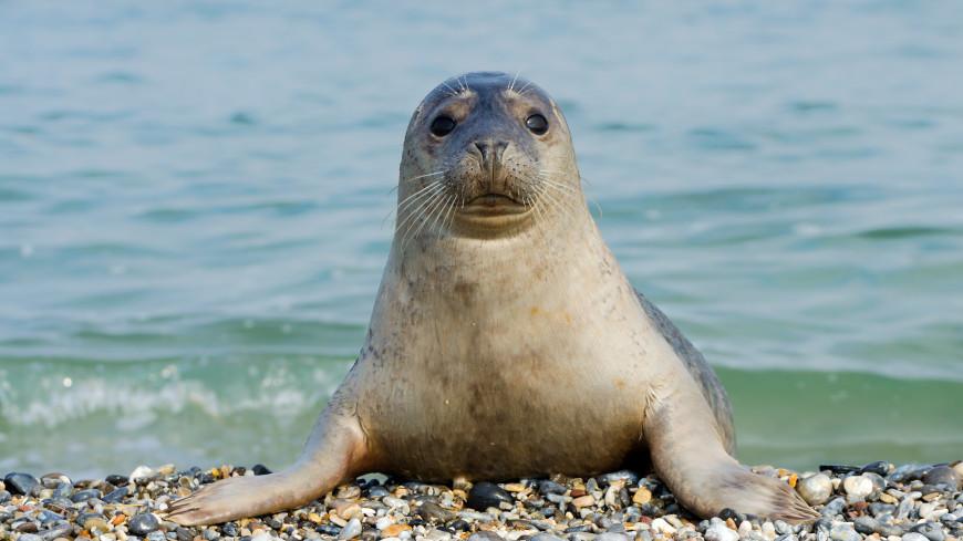Тюлени помогли ученым собрать данные об антарктических океанах
