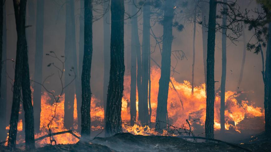 Природные пожары под Тюменью тушит авиация