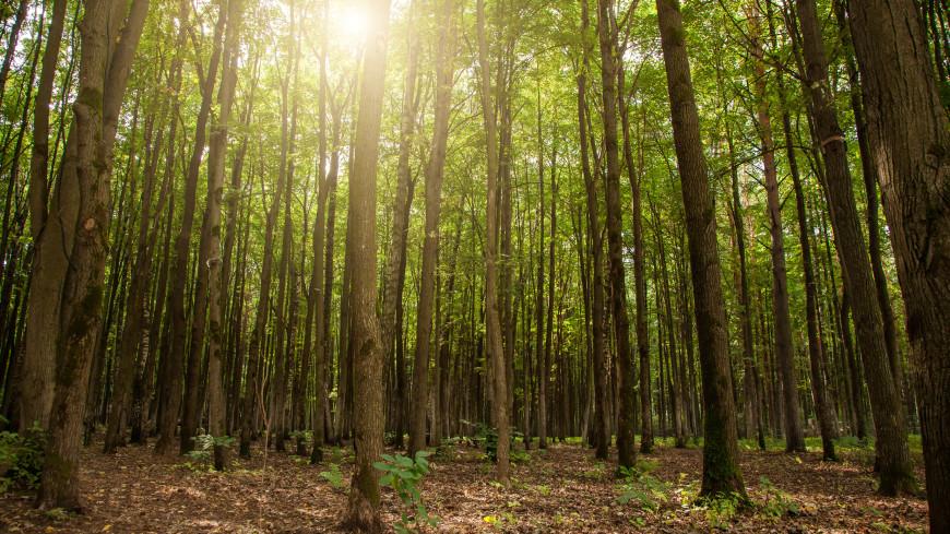 За последние 20 лет на Земле выросли леса размером с Францию