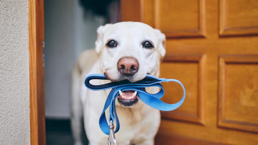 «Ваша собака отобрала игрушку у моего ребенка!»: Где и как можно выгуливать своих питомцев. Комментарий юриста