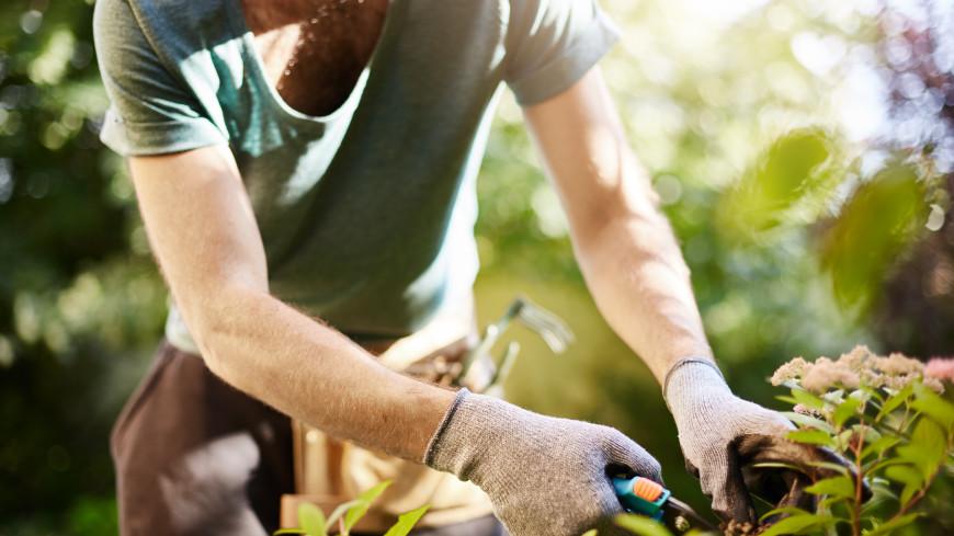 Без фанатизма: как не потерять здоровье на грядках в борьбе за урожай