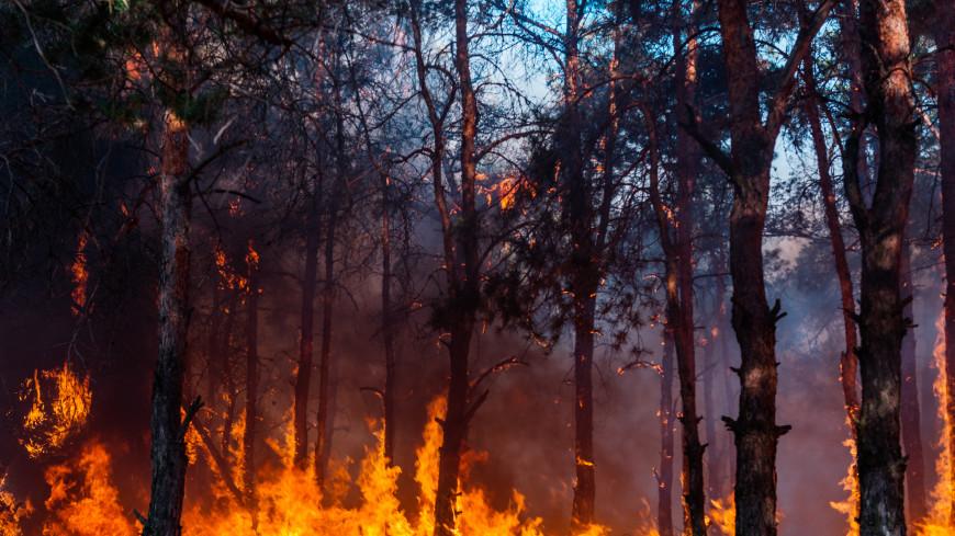 Тайга в огне: сгорели 200 тысяч гектаров