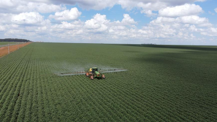 Регионы России получат 3,4 млрд рублей на производство масличных культур