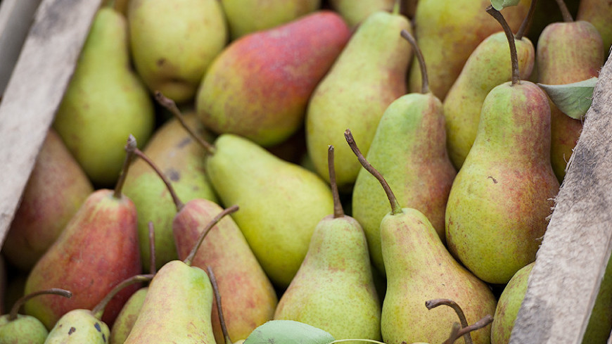 Ученые предупредили, что запах бананов и груш может разозлить пчел