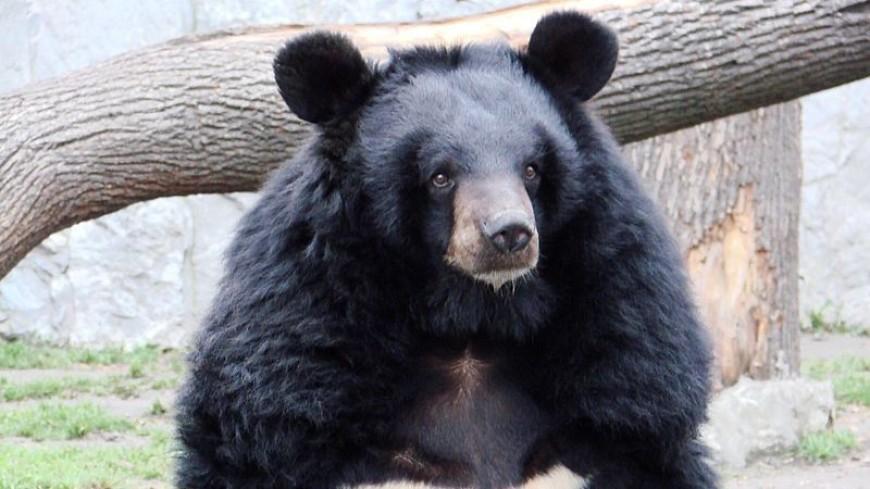 Дом для косолапых: в Приморье создали приют для гималайских медведей